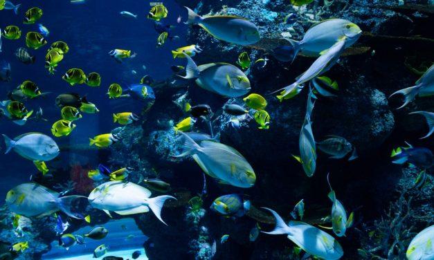 Dampak Sampah Plastik bagi Ekosistem Laut
