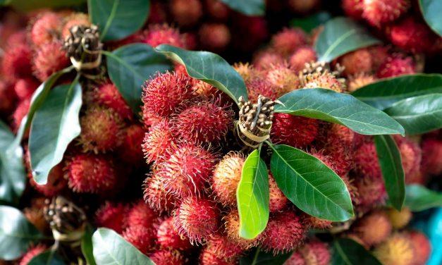 Manfaat mengkonsumsi Buah Rambutan