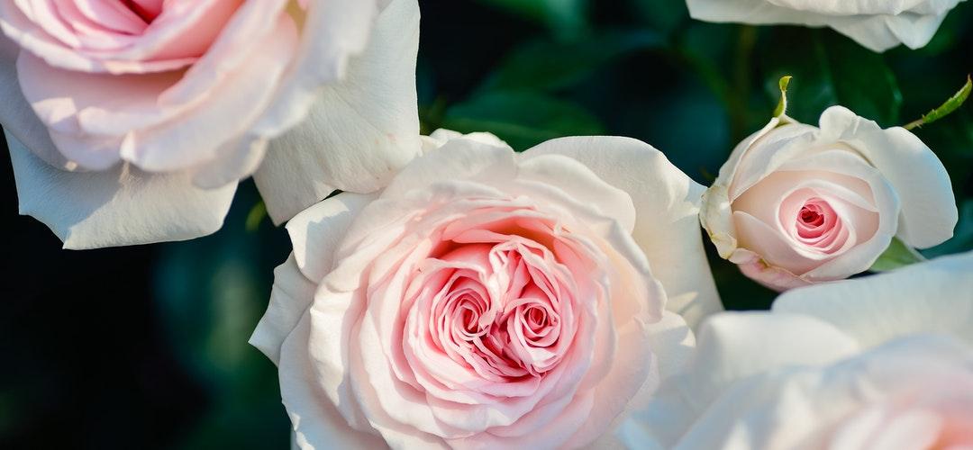 Hand Bouquet Untuk Pernikahan Impian